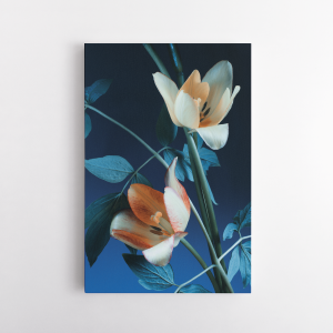 Tulipánok, kék háttér